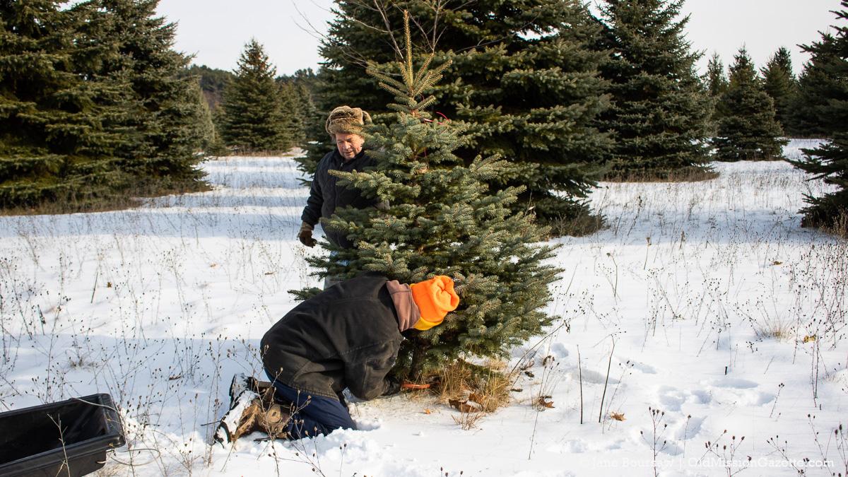 Switz.R.Land Evergreen Tree Farm: Tim Boursaw holds the tree up while Don Switzer cuts it | Jane Boursaw Photo