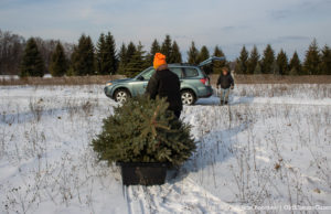 Don Switzer hauls a Christmas Tree back to the Gazette-Mobile | Jane Boursaw Photo