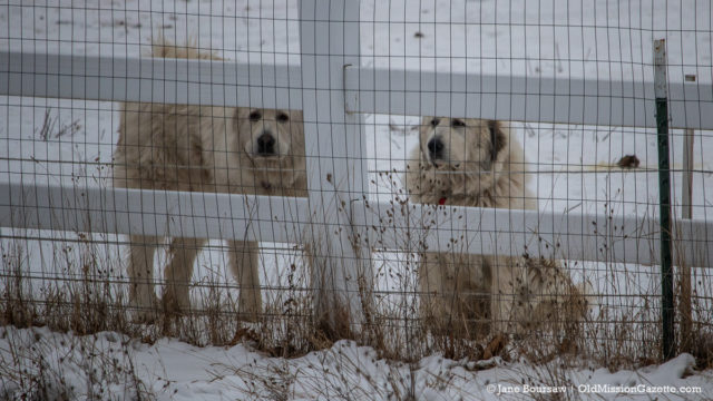 Becky Tester Dogs on the Old Mission Peninsula | Jane Boursaw Photo