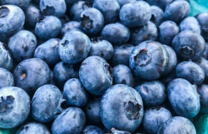 Blueberries from The Farm at Cherry Hill on the Old Mission Peninsula | The Farm at Cherry Hill Photo