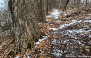 Ridgewood Trail on the Old Mission Peninsula | Jane Boursaw Photo