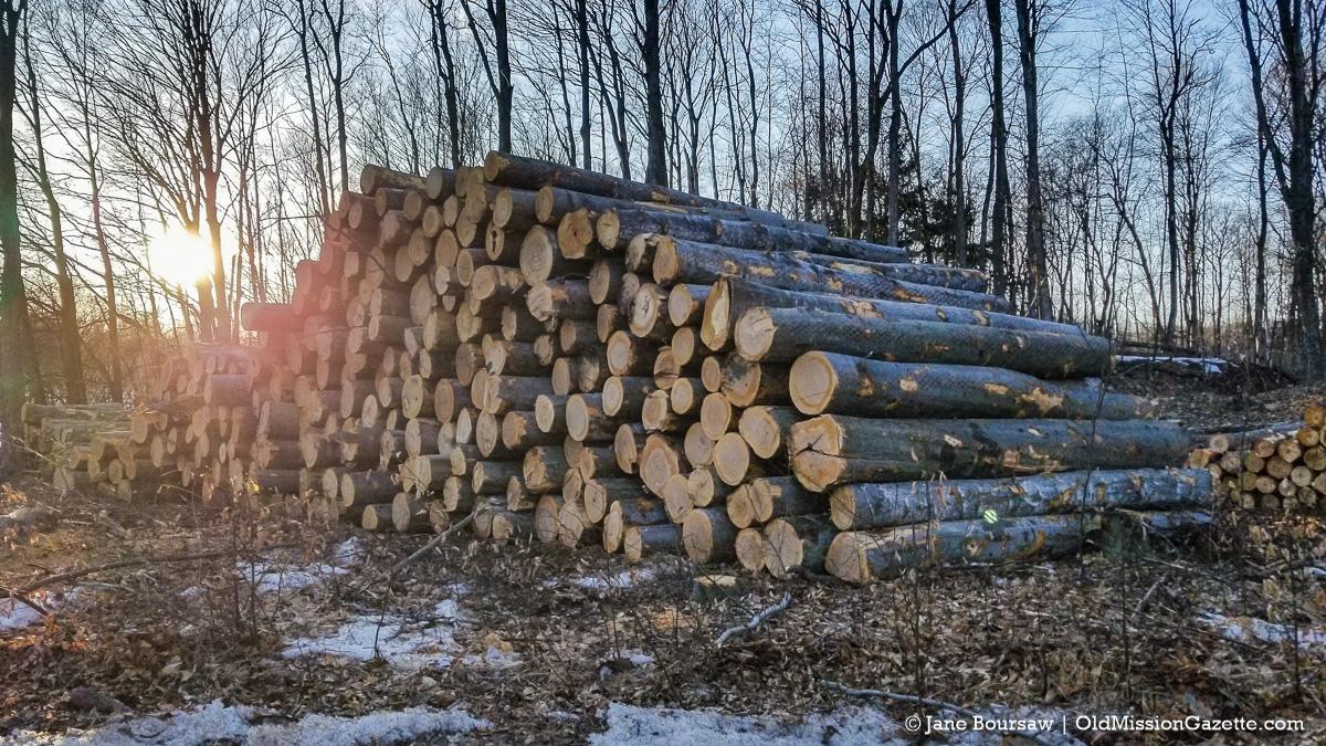Tree-Cutting on Smokey Hollow Road north of 2 Lads Winery | Jane Boursaw Photo