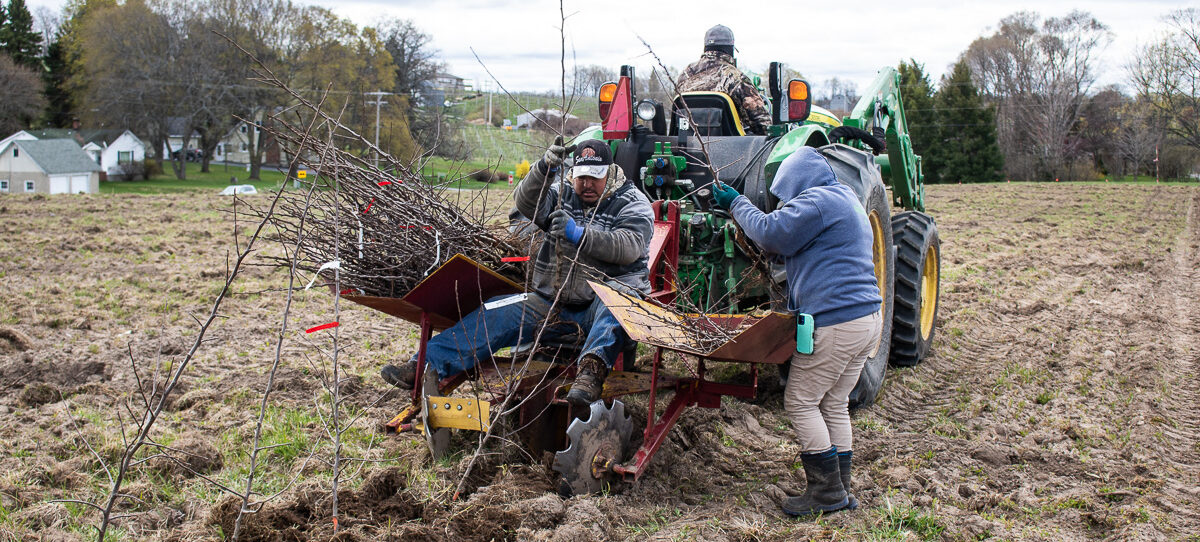 Planting high-density Honeycrisp apples on Johnson Farms on the Old Mission Peninsula | Jane Boursaw Photo