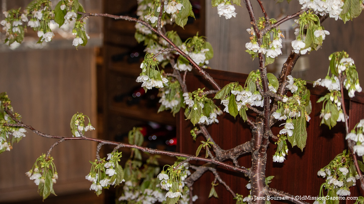 Tart cherry blossoms at Chateau Chantal for the Blessing of the Blossoms | Jane Boursaw Photo