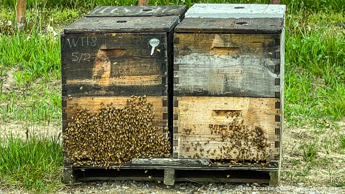 """Bee hives on """"The Forty"""" at Johnson Farms; apple orchard on the corner of Peninsula Drive and Kroupa Road 