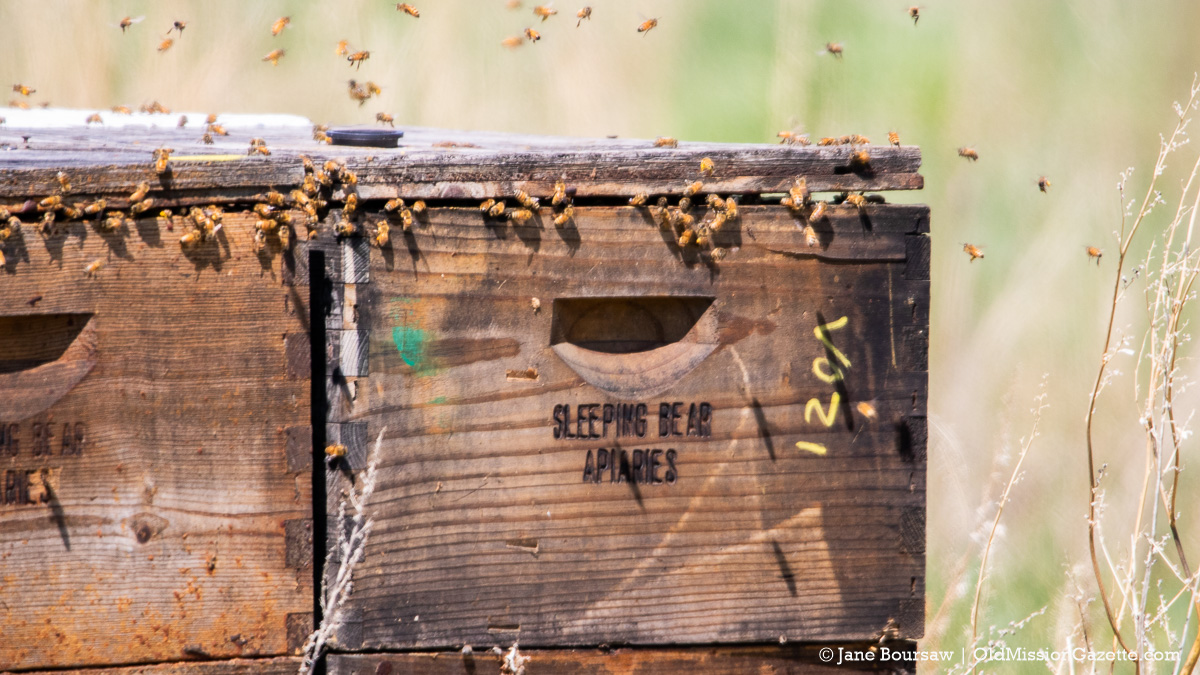 Bees at Johnson Farms on the Old Mission Peninsula   Jane Boursaw Photo