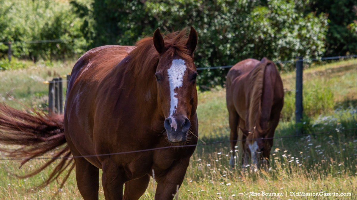 Summer and Sugar at Johnson Farms on the Old Mission Peninsula | Jane Boursaw Photo