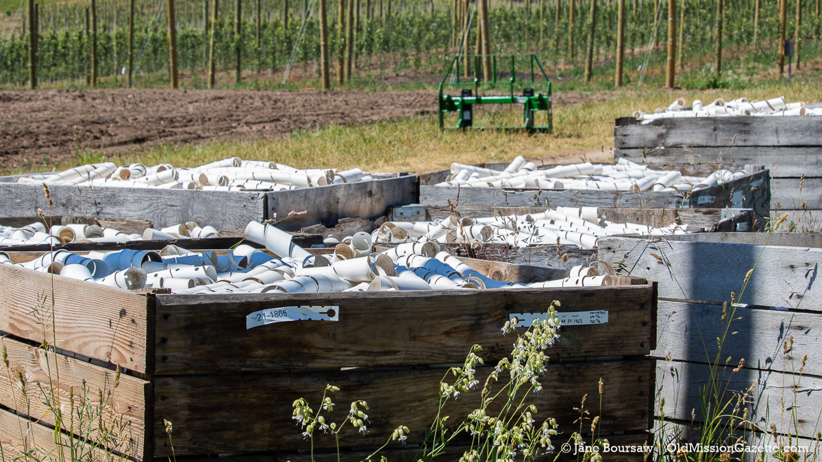Tree guards ready for new apple trees at Johnson Farms on the Old Mission Peninsula | Jane Boursaw Photo