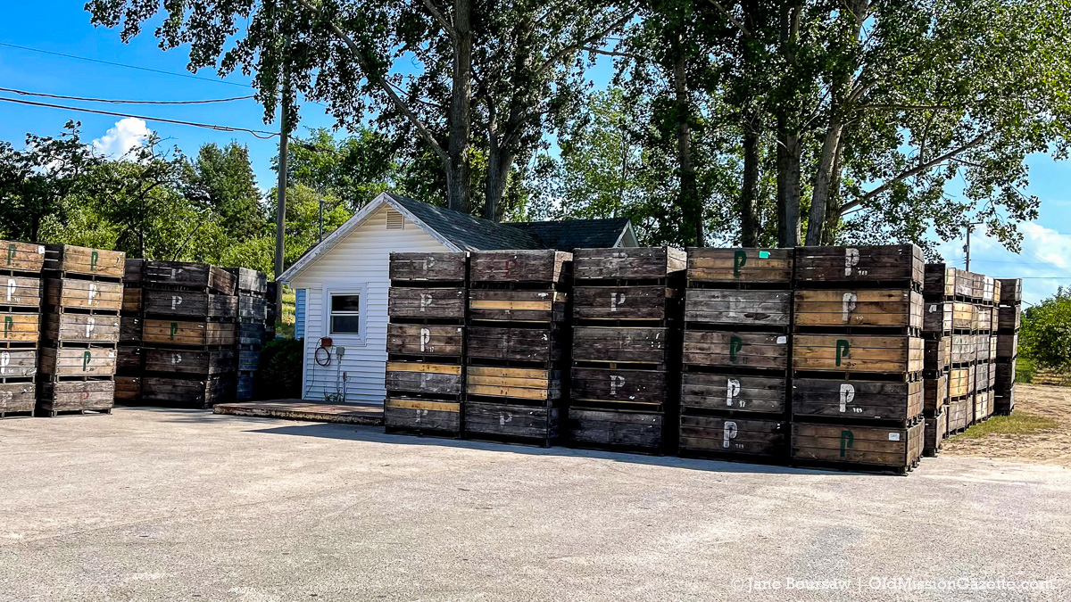 Cherry Boxes at Johnson Farms' Cooling Pad/Receiving Station on Center Road | Jane Boursaw Photo