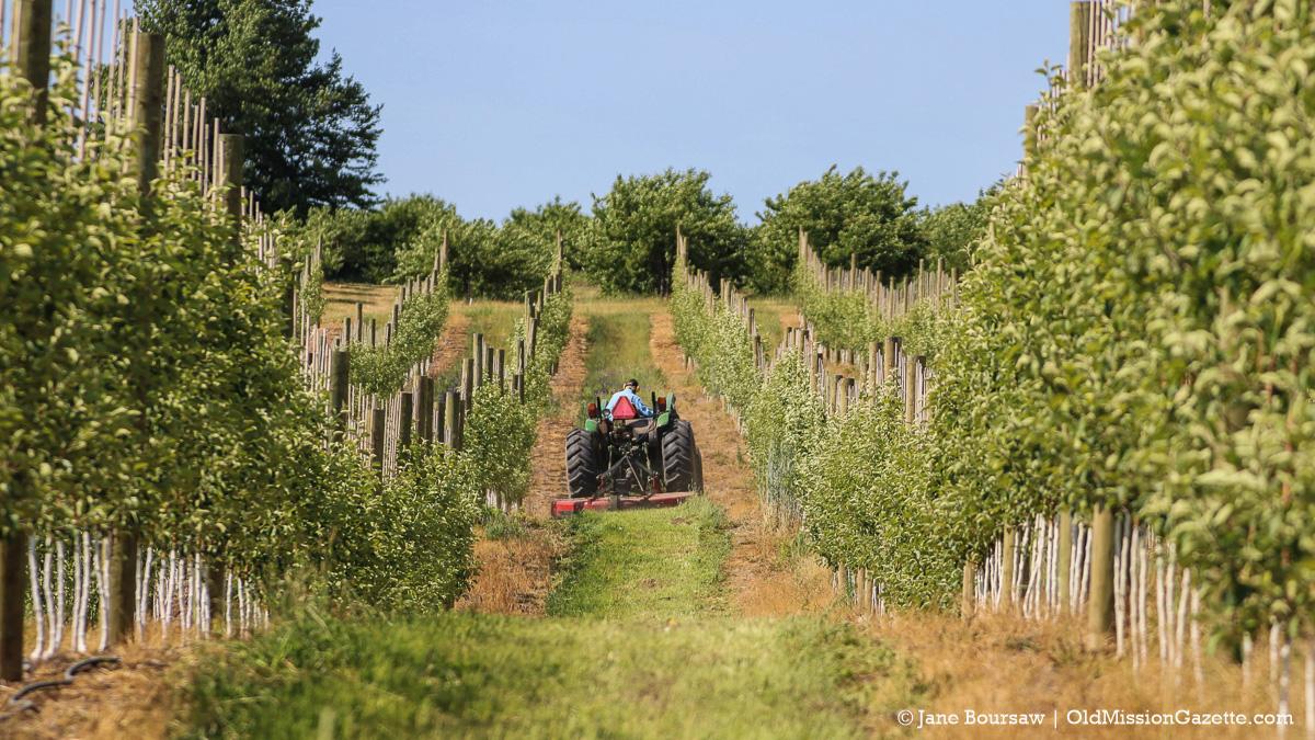 Dean Johnson mowing apple orchard at Johnson Farms | Jane Boursaw Photo