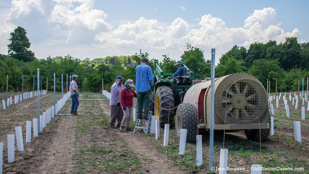 Setting poles for Pinot Grigio grapes on Ward Johnson's farm | Jane Boursaw Photo