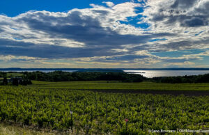 Winery Hill on the Old Mission Peninsula | Jane Boursaw Photo