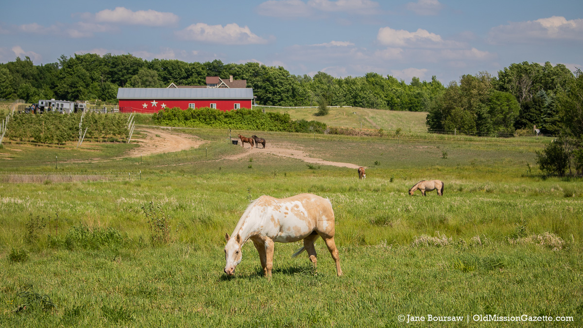 """Horses on Peninsula Drive across from Johnson Farms' """"The Forty"""" 