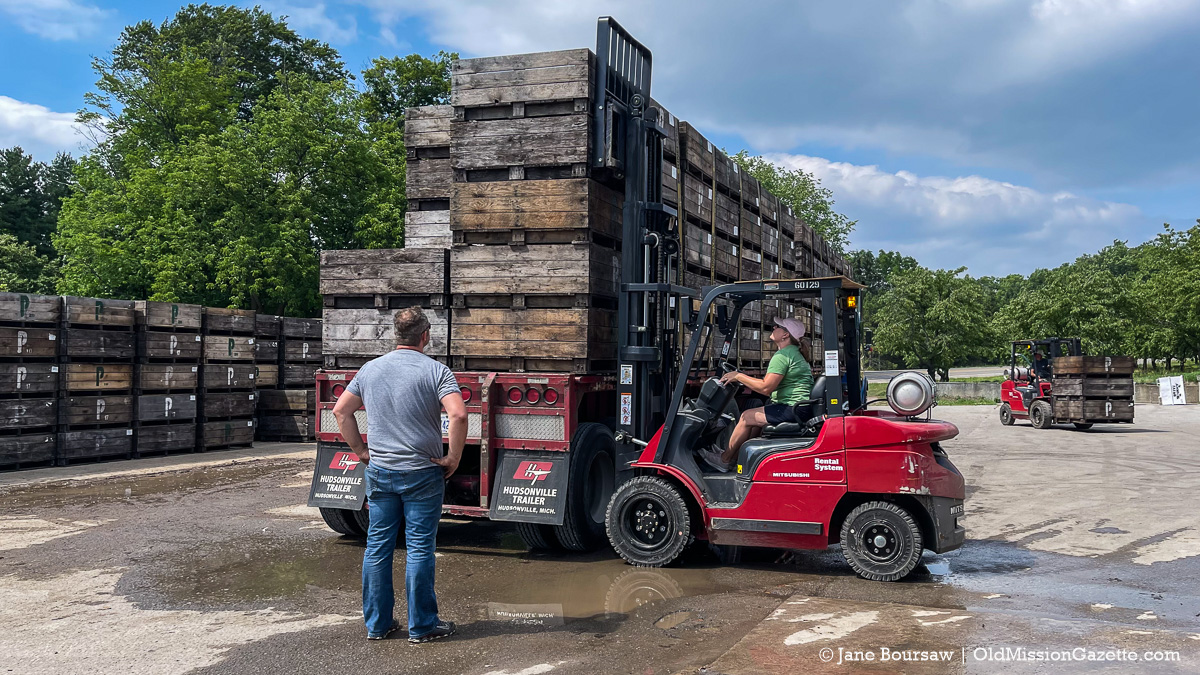 Heatherlyn Johnson loads cherries onto a truck at the Johnson Farms cooling pad on the Old Mission Peninsula | Jane Boursaw Photo