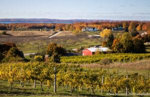 Wineries - Zoning Ordinance; Old Mission Peninsula Farmland | Jane Boursaw Photo