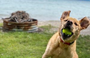Simon Boursaw and his beloved tennis ball; Old Mission Peninsula with East Bay in the background | Jane Boursaw Photo