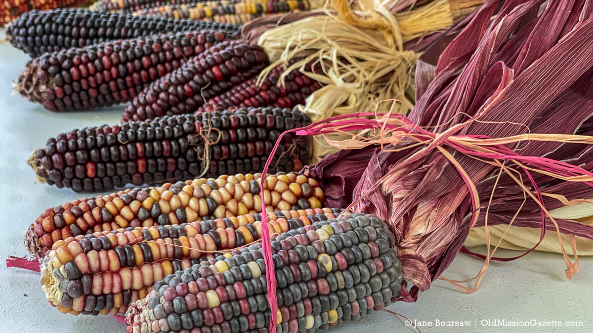 Multi-colored corn on display at Mission Point Lighthouse; Harvesting History event | Jane Boursaw Photo