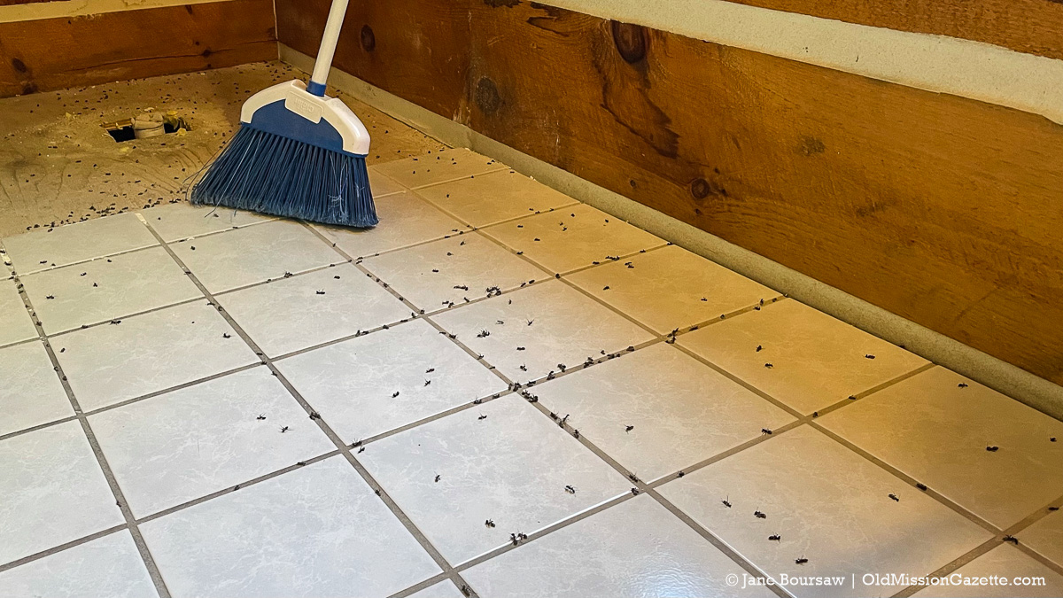 Gruesome crime scene of carpenter ants in Tim and Jane's bathroom after the shower was torn out | Jane Boursaw Photo