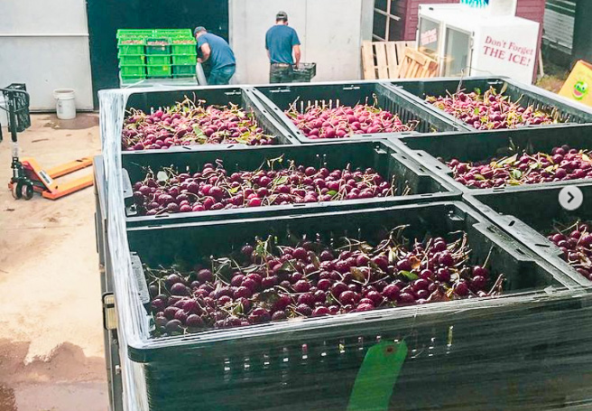 Rescued Cherries from Wunsch Farms | Food Rescue Photo