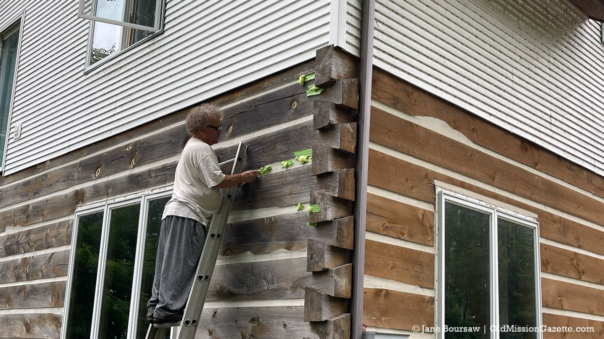 Tim filling in ant and bee homes in our house | Jane Boursaw Photo