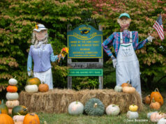 Cory Holman's Pumpkin Patch on the Old Mission Peninsula | Jane Boursaw Photo