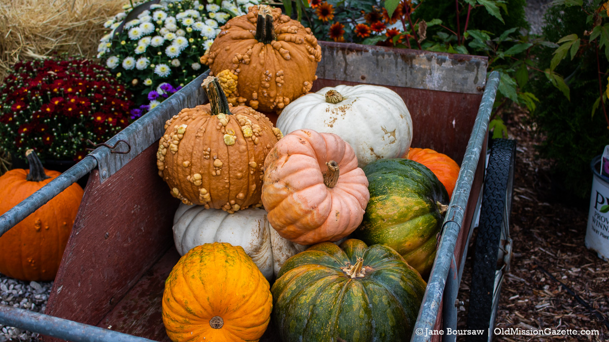 Ornamental pumpkins and gourds at Little Fox Farm on the Old Mission Peninsula | Jane Boursaw Photo
