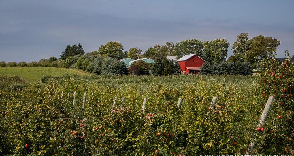 Farmers - Farmland on the Old Mission Peninsula   Jane Boursaw Photo